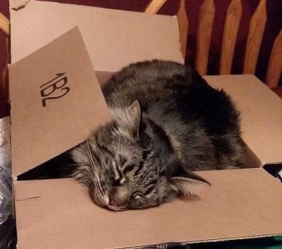 Fivel the Cat