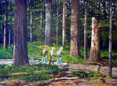 A Western Oregon Forest Osu Libraries Oregon State
