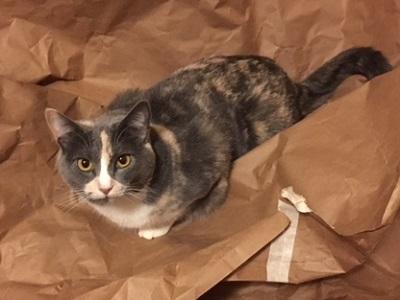 Furiosa the Cat