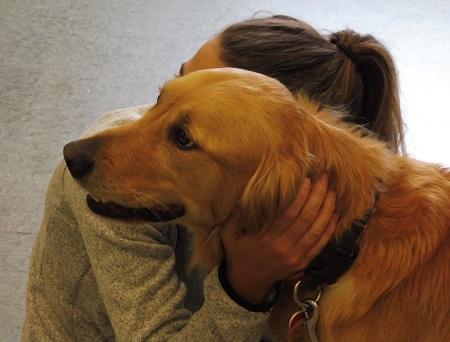 Golden retriever being hugged.