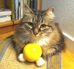 Topaz the cat