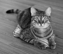 Paulette the cat